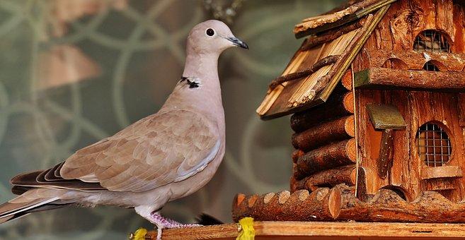 Dove, Bird, Food, Aviary, Feather, Plumage, Feeding