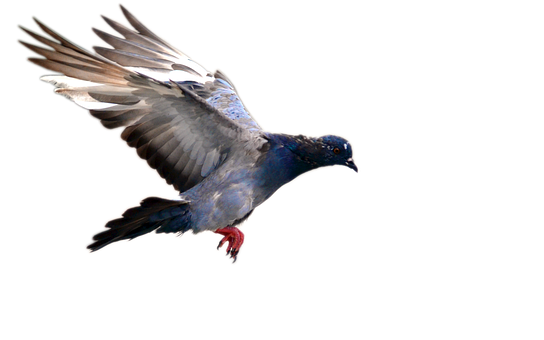 Pigeon, Flying, Bird, Nature, Day, Move, Park, Feather
