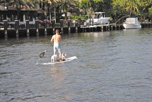 Paddle Board, New River, Fort Lauderdale, Dogs, Water
