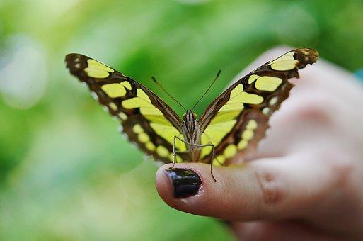 Butterfly Dolls, Dolls, Butterflies, Rest, Sleeve