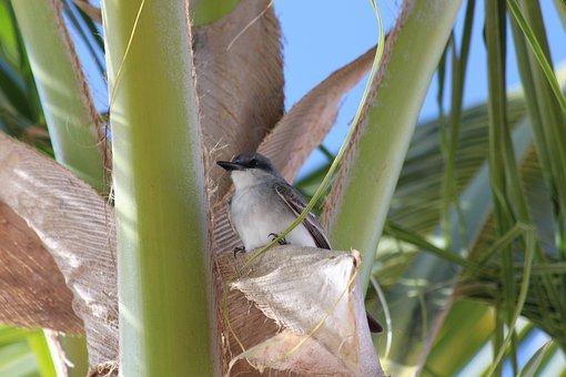 Birds, Beak, Palma, Feathered Race, Animals, Nature