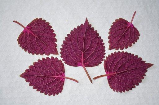 Leaf, Natur, Natural, Plant, Leaves, Garden, Floral
