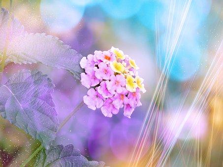 Flower, Lantana, Blossom, Bloom, Tender, Bokeh