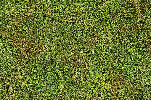 Out, Field, Flora, Fresh, Garden, Gardening, Grass