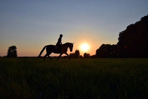 Ride, Trot, Sunset, Horse, Meadow, Grass