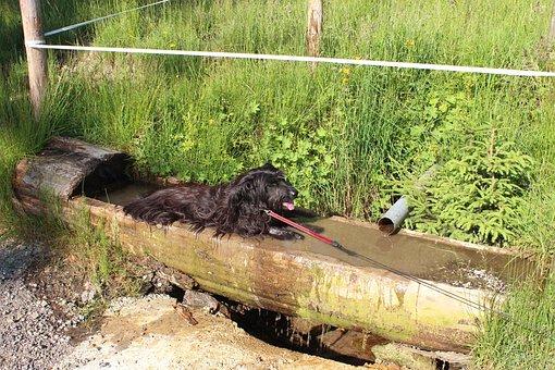Allgäu, Hiking, Mountaineering, Summer, Dog, Animal