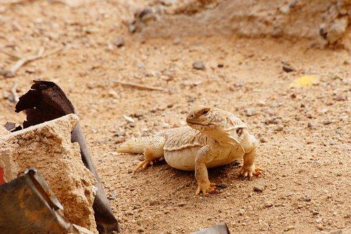 Animal, Lizard, Monitor Lizard, Camouflage, Iguana