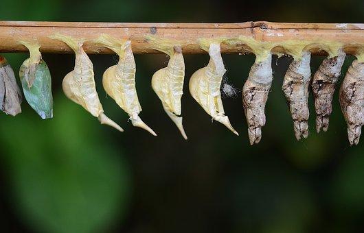 Cocoons, White, Larva, Larvae, Insect Larvae, Macro