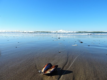 Open Shell, Lincoln City, Beach, Oregon, Coast, Ocean