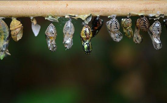 Larvae, Eclosion, Cocoons, Larva, Insect Larvae, Macro