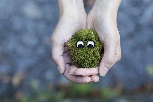 Moss, Ecology, Environment, Protection, Live, Life
