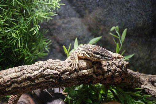 Exot, Reptile, Zoo, Monitor, Nature, Creature