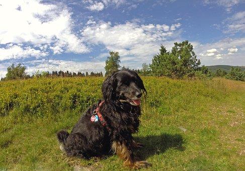 Dog, Summer, Animal, Fur, Nature, Meadow, Color, Pet
