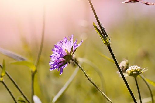 Flower, Blossom, Bloom, Violet, Pointed Flower