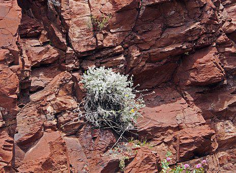 Red Rocks, Plant, Perpendicular, Walls, Rock Columns