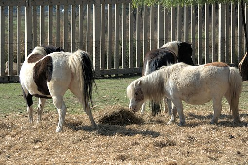 Little Ponies, Country, Children, Riding