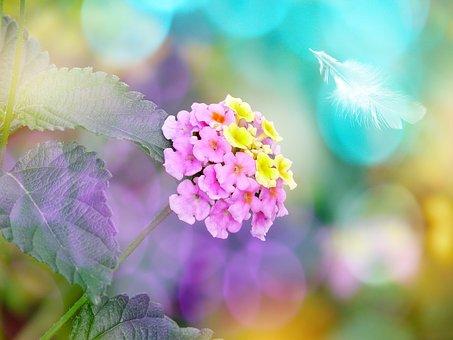 Flower, Blossom, Bloom, Lantana, Spring, Greeting Card