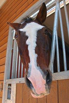 Horse, Horse Head, Reiter, Stall