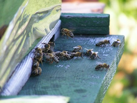 Bees, Hive, Beehive, Swarm, Insects, Flying, Honey
