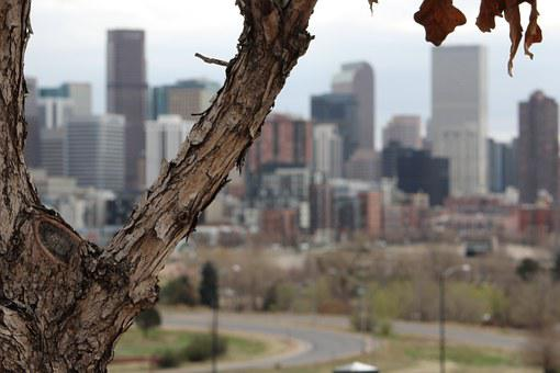 Tree, City, Urban, Nature, Skyline, Denver, Mile High
