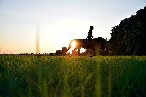 Ride, Sun, Horse, Trot, Reiter, Meadow, Grass