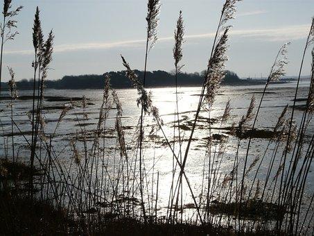 Early Morning, Scene, Water, Cams Bay, Morning