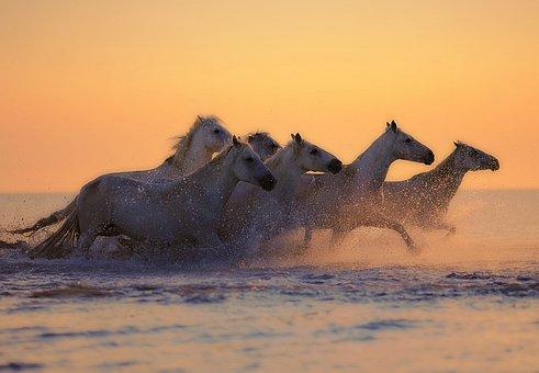Horses, Herd, Water, Animals, Horseback Riding, Mane