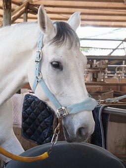 New Hope Racecourse, White, Whitehorse