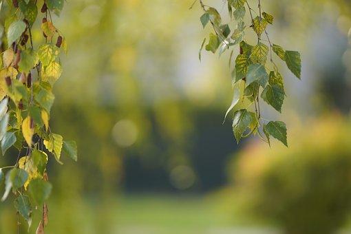 Autumn, Deciduous, Plant, Leaf, Nature