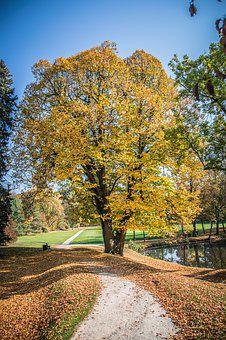 Autumn, Leaves, Colorful, Nature, Park, Dry, Shading