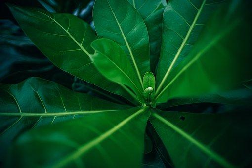 Backdrop, Background, Beautiful, Botanical, Bud