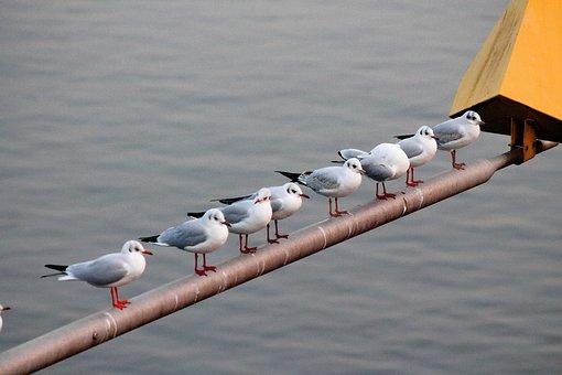 Gulls, Rod, Romance, Mosel, Water, Birds