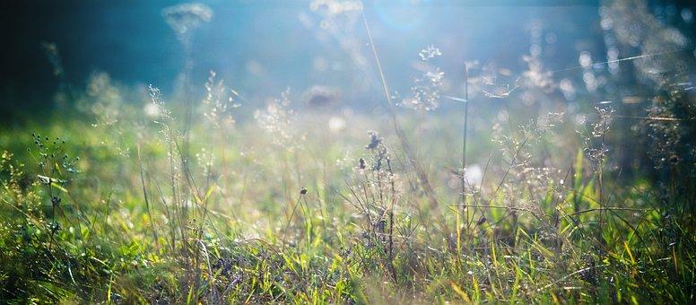 Grass, Plants, Flora, Botanica, Summer, Nature