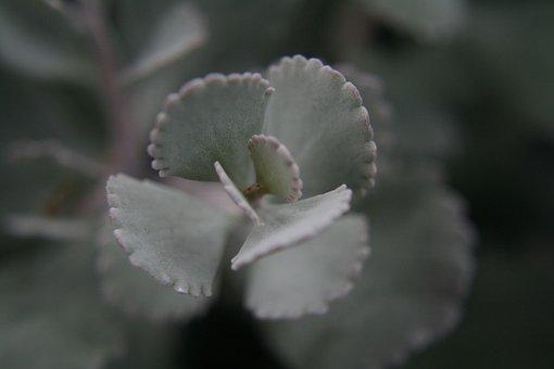 Botanical, Garden, Berlin, Cactus