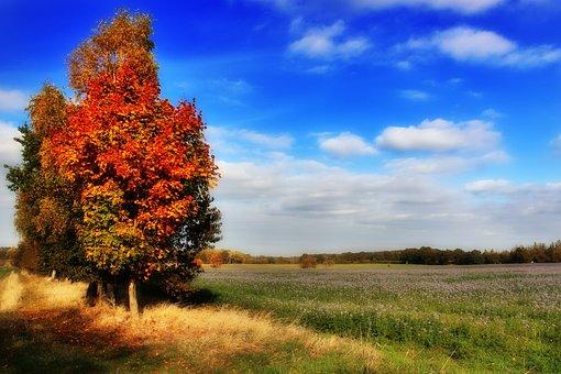 Autumn, Trees, Leaves, Sky, Clouds, Blue Sky, Orange