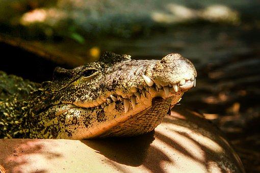 Crocodile, Sun, Vacation, Zoo, Summer, Nature, Teeth