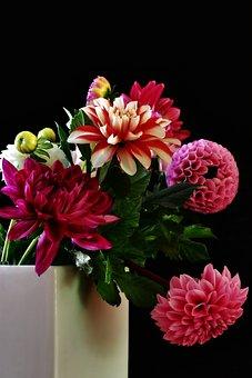Dahlias, Pink, Flower, Dahlia Garden, Flora, Close Up