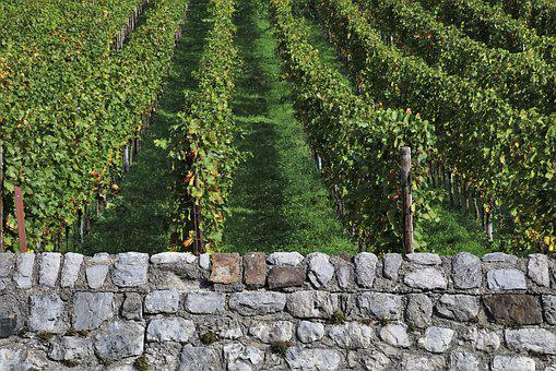 Lake Dusia, Vineyard, Eco, Stone, Structure, Background