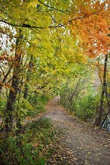 Path, Fall, Autumn, Fall Foliage, Foliage, Yellows