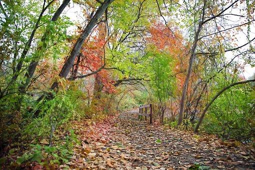 Path, Fall, Autumn, Fall Foliage