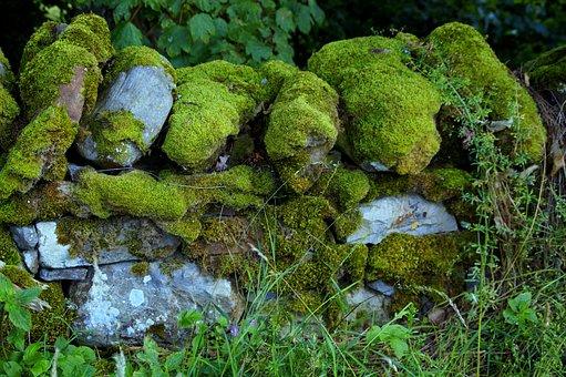 Wall, Moss, Moss Covered, Field Wall, Field Stones