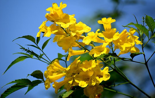 Yellow, Flowers, Nature, Blossom, Bloom