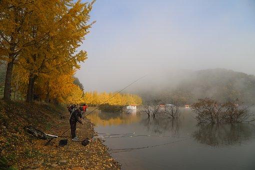 Lake, Ginkgo, Autumn Leaves, Fishing, Morning