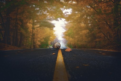 Snail, Autumn, Road, Leaves, Glide, Shell, Color
