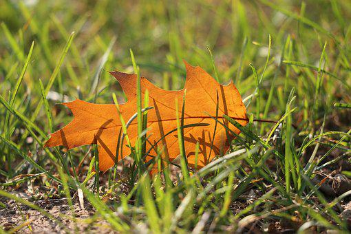Brown Leaf, Grass, Transparent, Autumn, Colorful