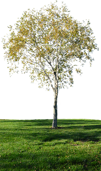 Tree With No Background, Grass, Landscape, Green