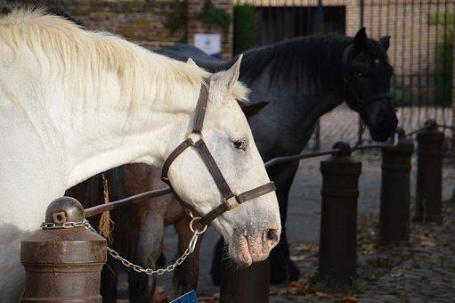 Animal, Horse, Mammals, Mane, Horses, Horseback Riding