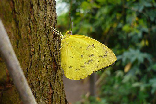 Butterfly, Yellow, Insect, Nature, Summer, Close Up