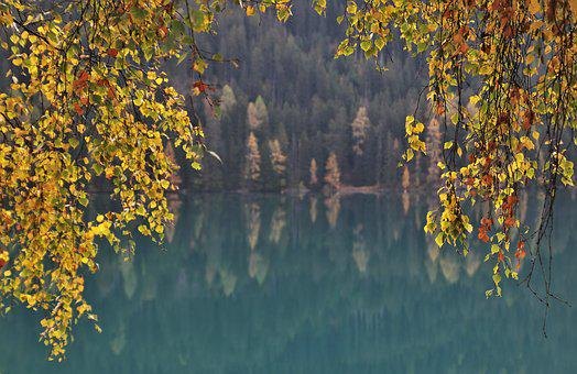 Twigs, Foliage, Autumn, Lake, Alpine, Davos, Delicate