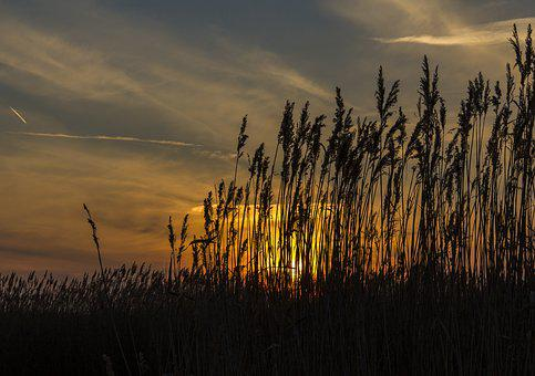Reed, Sunset, Silhouette, Nature, Landscape, Lake, Sky